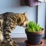 ペットを飼っている戸建て住宅とマンションでは、同程度の傷や汚れが残っていても、査定額の影響度が変わってくるのです。